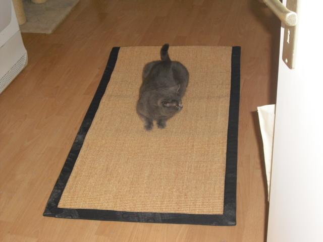Ikea Sisalteppich sisal teppich ikea excellent x ikea sisal teppich lufer fr flur