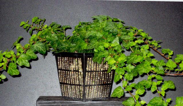 Rehabilitation f r einen pflanzenvernichter pflanzen botanik green24 hilfe pflege bilder - Schattenpflanzen zimmer ...