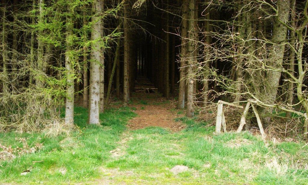 Tajemnicze lasy 29
