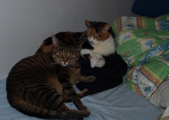 katze geschenkt bekommen doch jetzt nur probleme katzen recht katzenforum mietzmietz. Black Bedroom Furniture Sets. Home Design Ideas