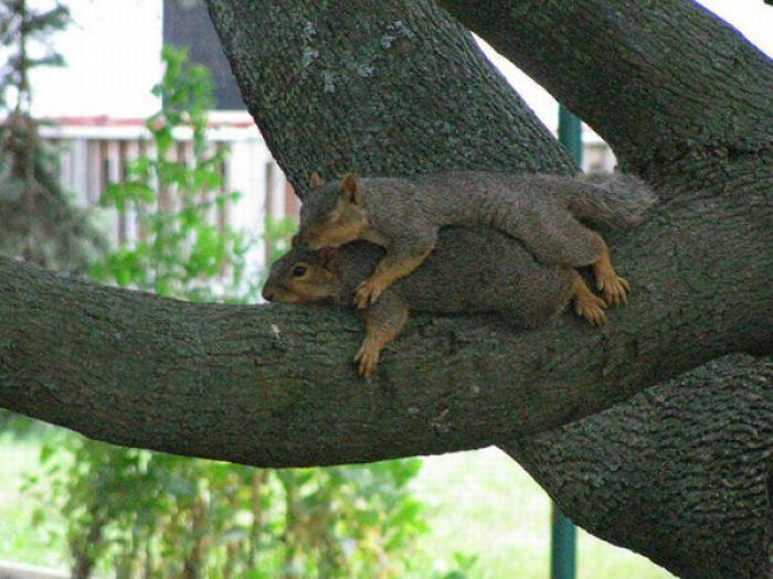 Leniwe wiewiórki 2