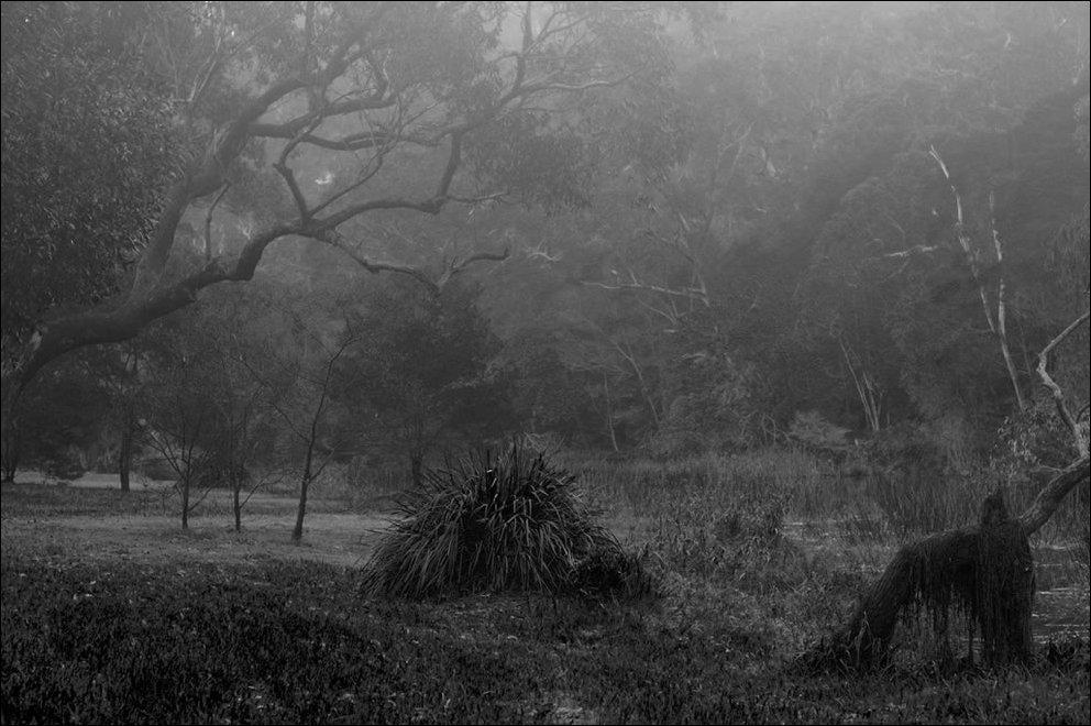 Tajemnicze lasy 24