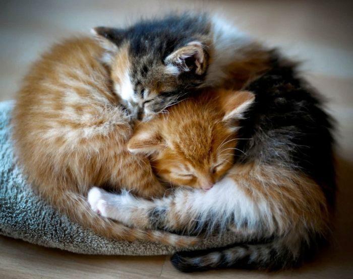 Słodkie kociaki 73