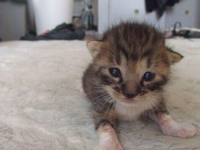 Słodkie kociaki 43