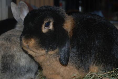 tierplanet aus liebe zum tier thema anzeigen bitte alle mitmachen kaninchenrassen sammeln. Black Bedroom Furniture Sets. Home Design Ideas
