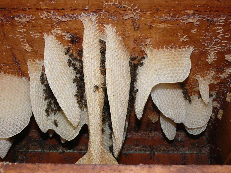 bienenvolk fragen zu hummeln wespen hornissen und anderen insekten imkerforum seit 1999. Black Bedroom Furniture Sets. Home Design Ideas