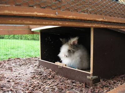 kaninchenstall selber bauen kaninchen. Black Bedroom Furniture Sets. Home Design Ideas