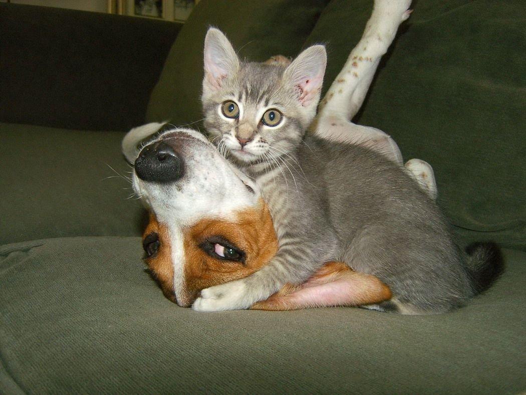 Zabawne zwierzaki #101 10