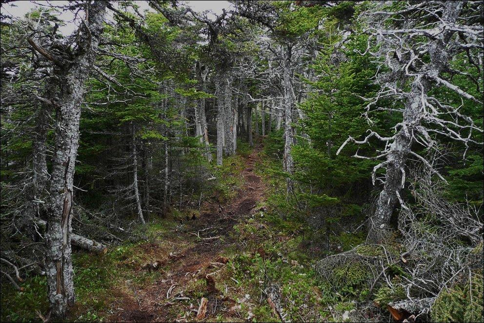 Tajemnicze lasy 18