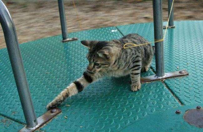Koty na spacerze 25