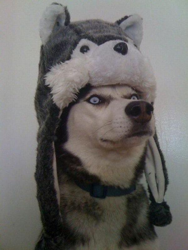 Zabawne zwierzaki #104 13