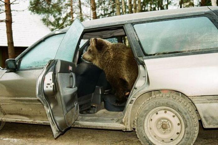 Porzucony niedźwiadek 22