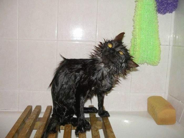 Koty w kąpieli 12