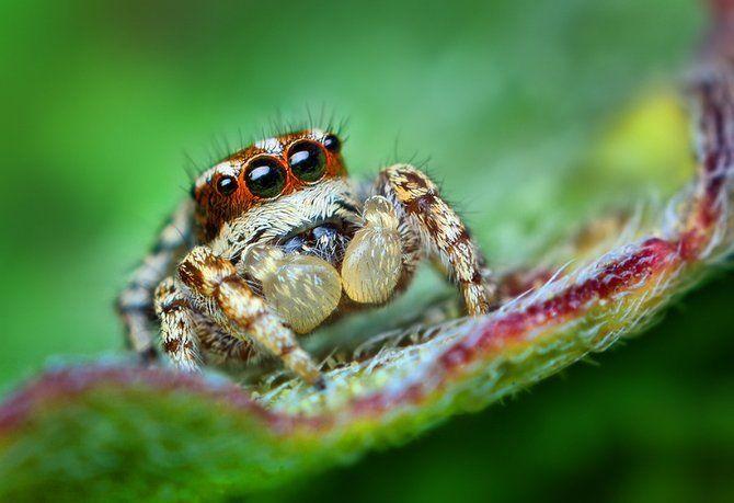 Makrofotografia - owady z bliska 28