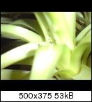 Kleine schwarze w rmer k fer for Kleine fliegen zimmerpflanzen