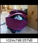 http://www.abload.de/thumb/p1030028fnvo.jpg