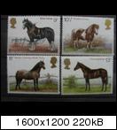 Pferde - Seite 2 Pferdeenglandmi.nr768-2b0z