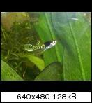 http://www.abload.de/thumb/rscn1974mesa8.jpg