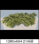 treed_tree1nbk7y.jpg