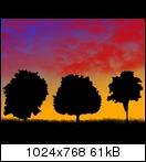 [Bild: treesarenotalonekyky.jpg]
