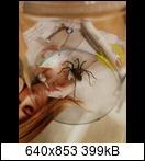 Spinnen - Was macht ihr? - Seite 9 W2p8r
